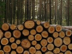Timber in a forest